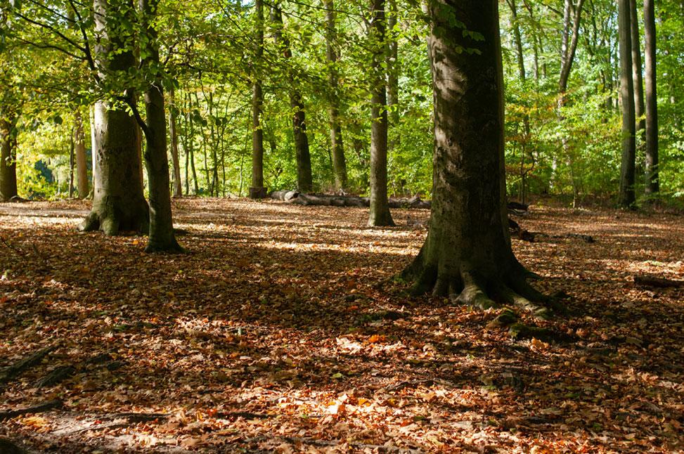 kaiserpark und bäume im Stadtwald