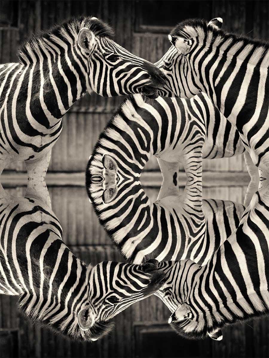 ZebrArt Streifen Zebras